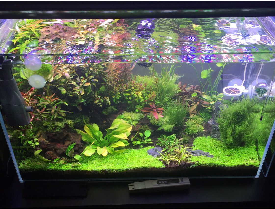 Best Aquatic Plants