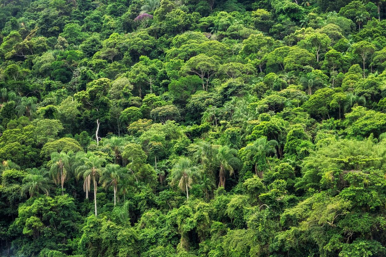amazon rainforest location - HD1254×836