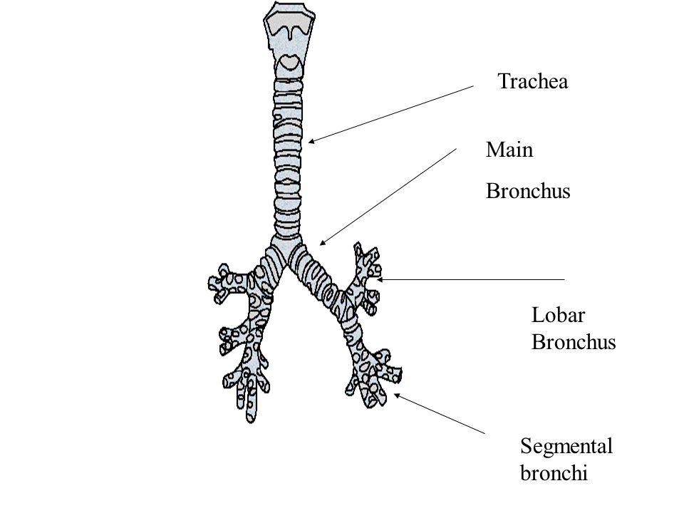 Famous Anatomy Of Hard Palate Festooning - Human Anatomy Images ...