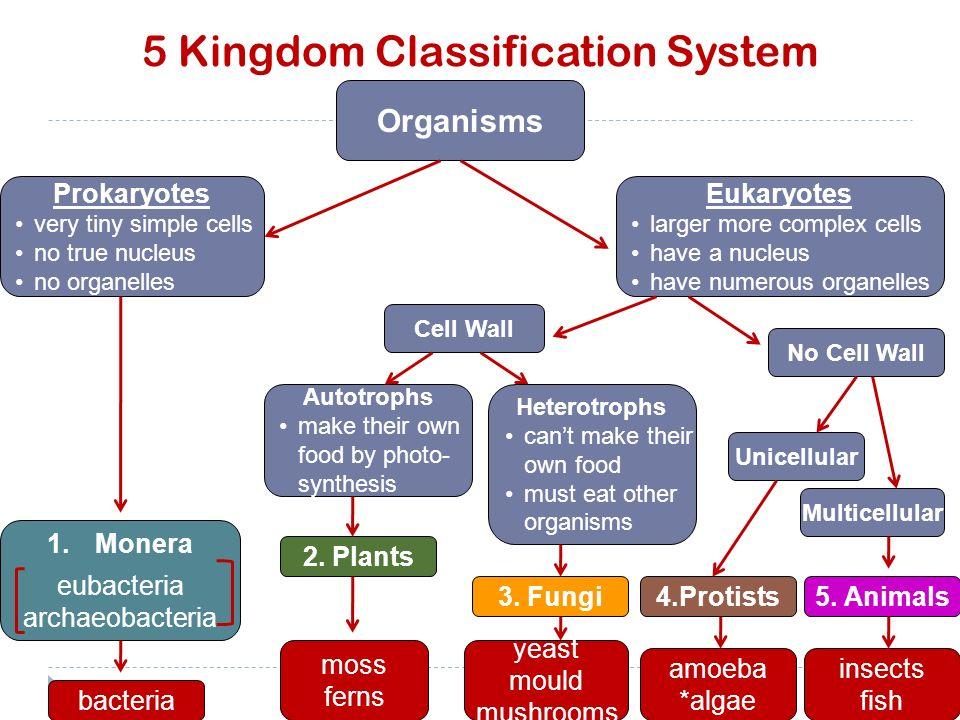Kingdom Protista Diagram