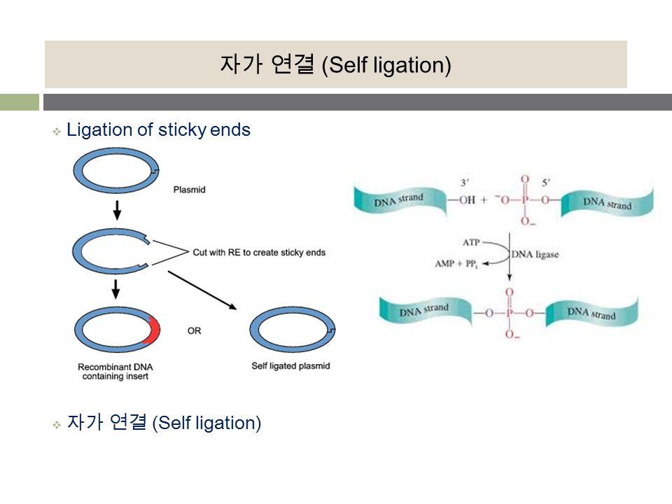 Plasmid Sticky Ends