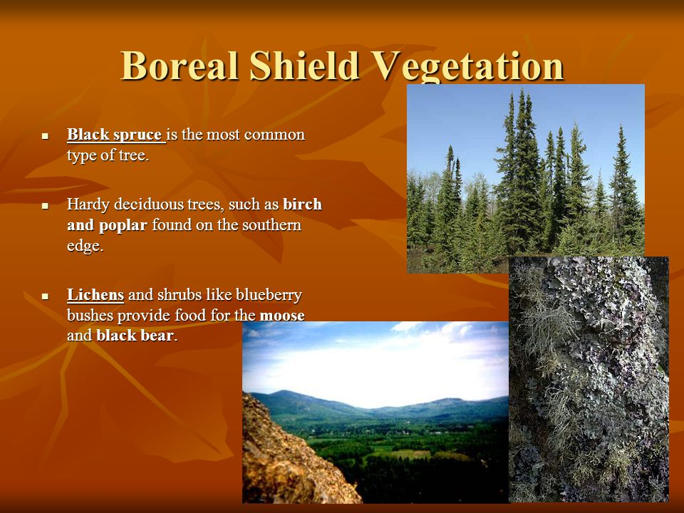 Boreal Animals Forest And Plants