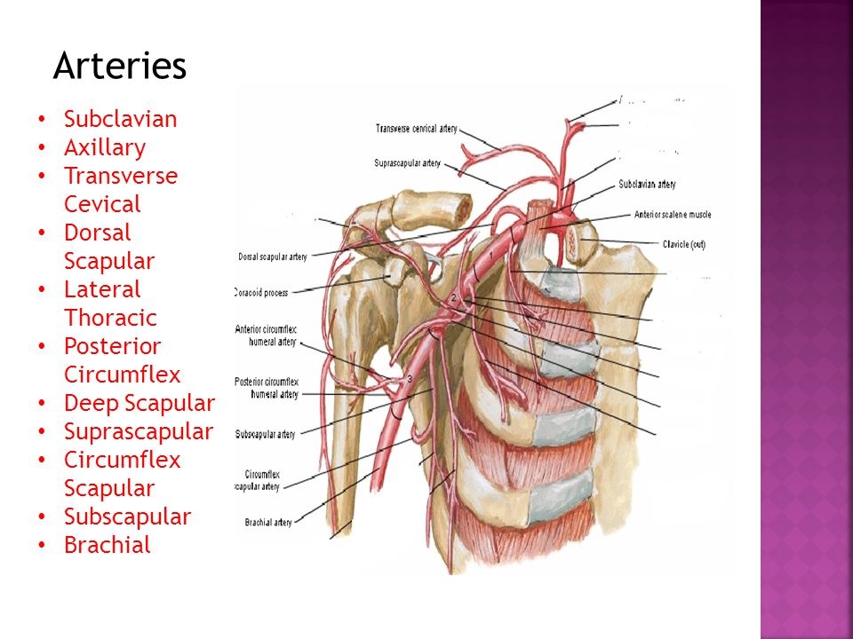 Spinal Accessory Nerve Impingement