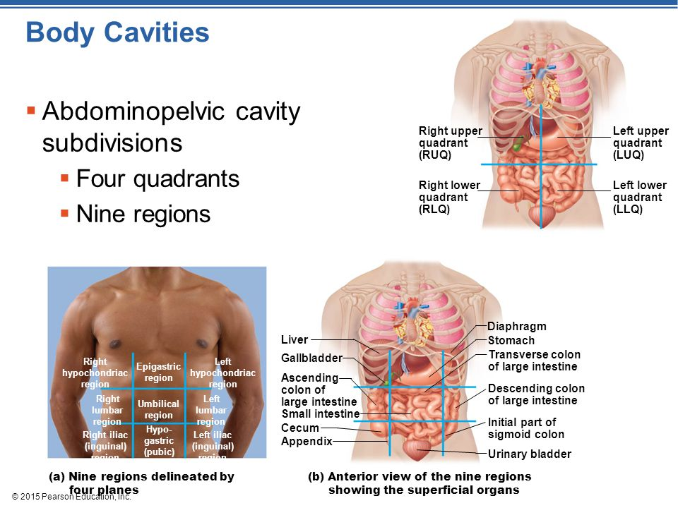 Abdominopelvic Regions Cavity 9