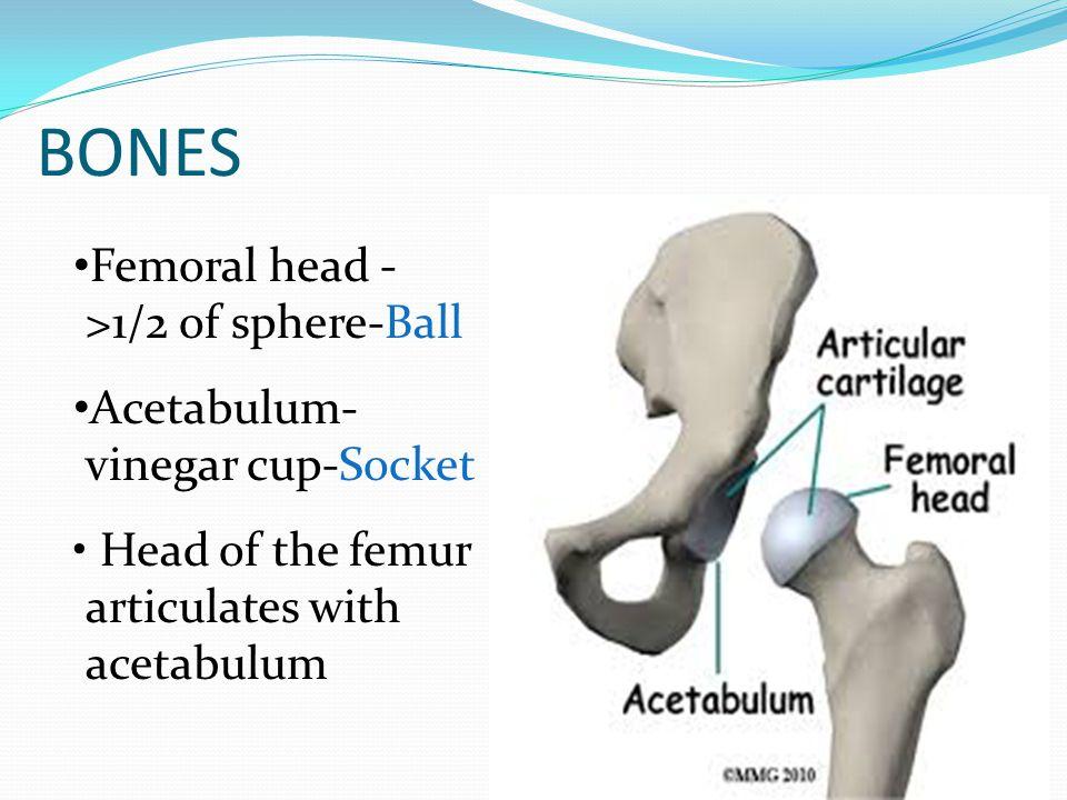 Right Iliofemoral Ligament