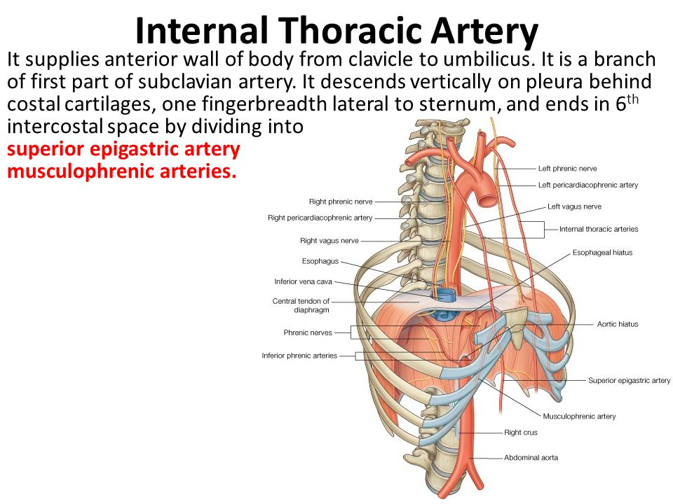 Right Inferior Epigastric Artery