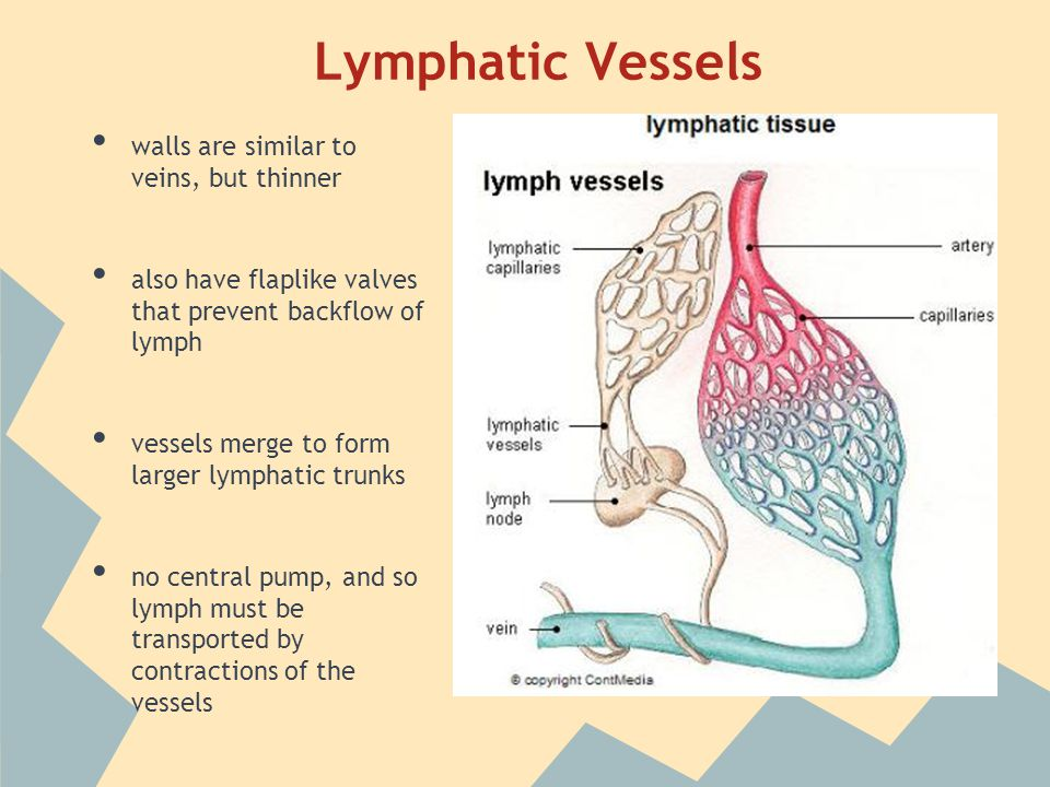 Lymphatic Capillaries Vessels Ducts