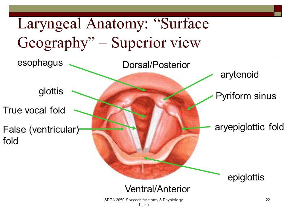 Piriform Sinus Ct Anatomy Of The