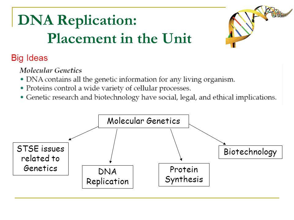 Chromosome Gene Dna And Replication