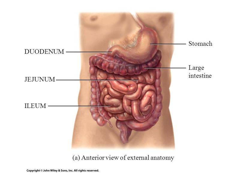 large intestine anatomy » Full HD Pictures [4K Ultra] | Full Wallpapers