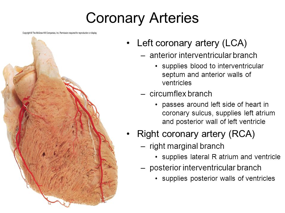 Mitral Left Circumflex Artery