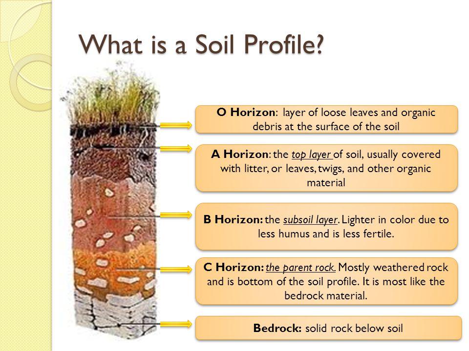 Soil Horizons Diagram Living Organisms