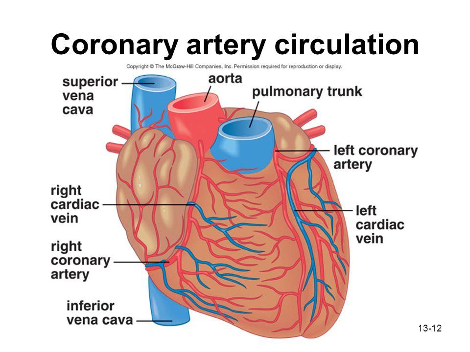 Right Pulmonary Artery Diagram