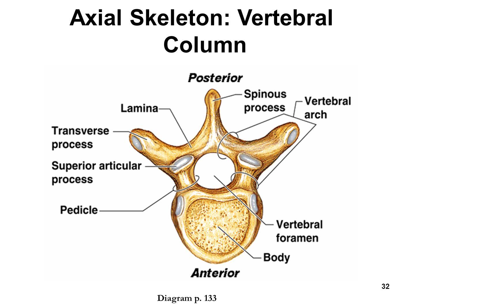 Encantador Sphenoid Bone Diagram Ornamento - Imágenes de Anatomía ...