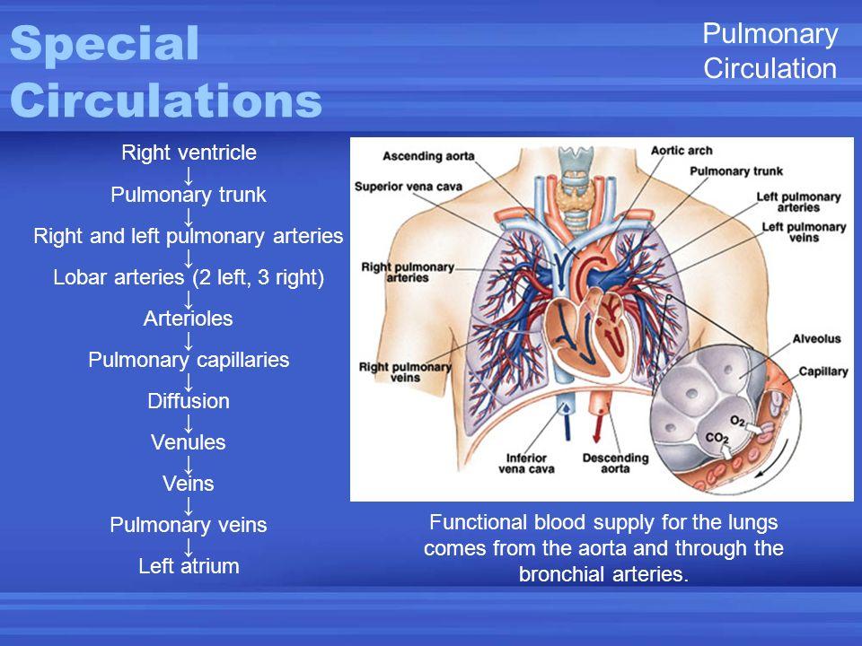 Subclavian Vein Anatomy