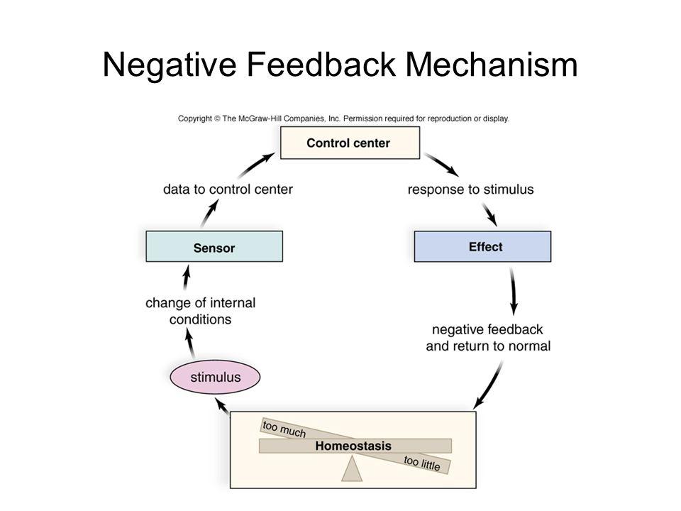 Positive Feedback Anatomy And Physiology