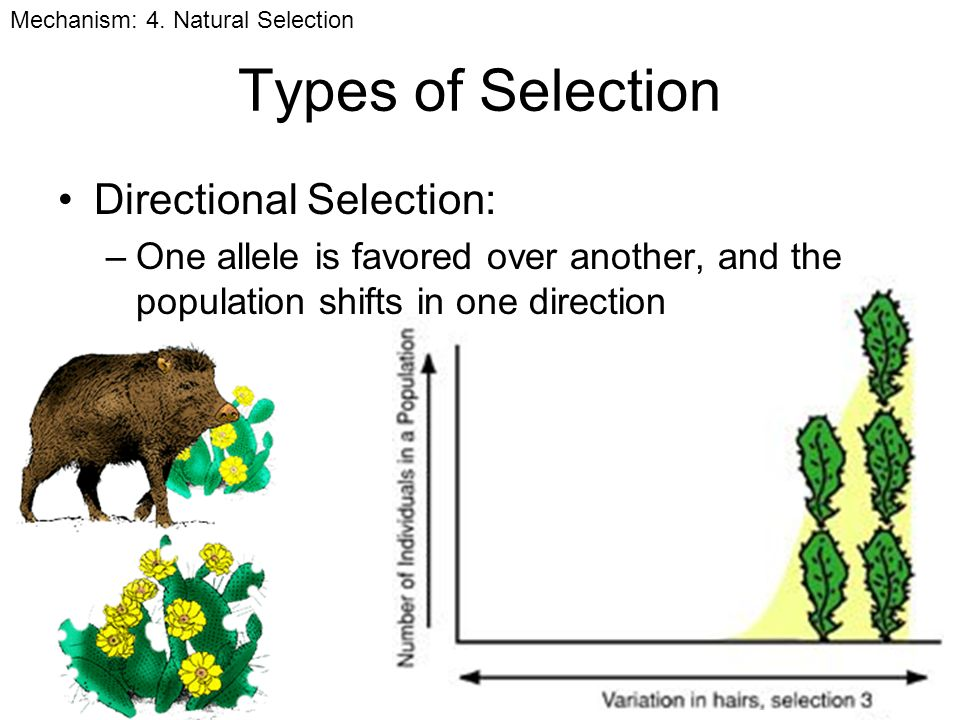 Types Natural Selection