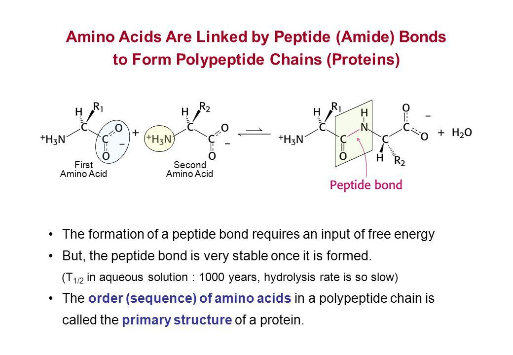 Terminus Amino Primary Sequence