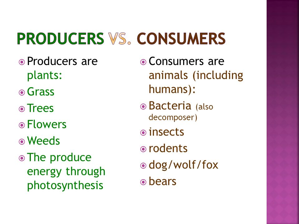 Consumer Animal Eating Animals