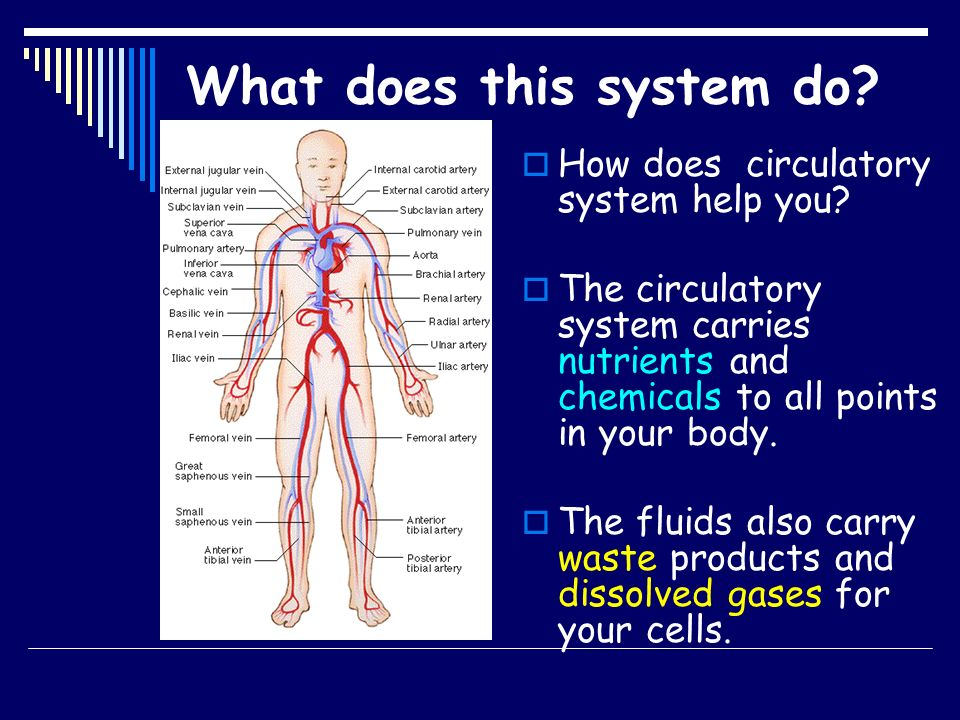 Human Body Never System