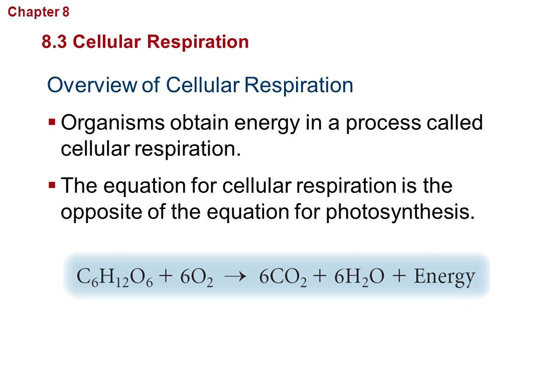 Ch 8 Cellul R Energy Secti 1 How G Nisms Obt Energy
