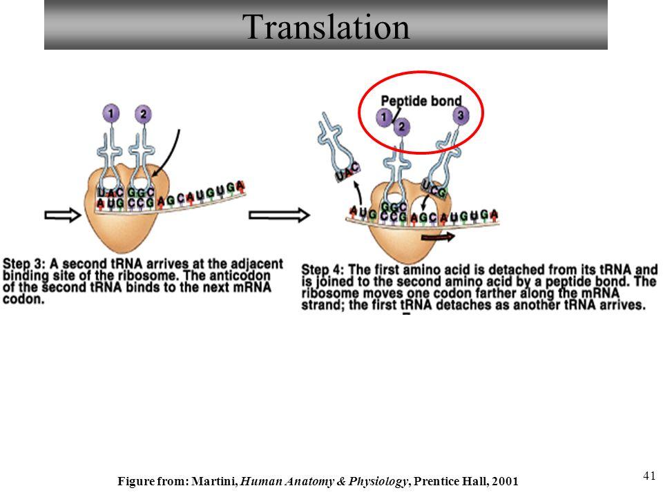 Martini Human Anatomy Physiology