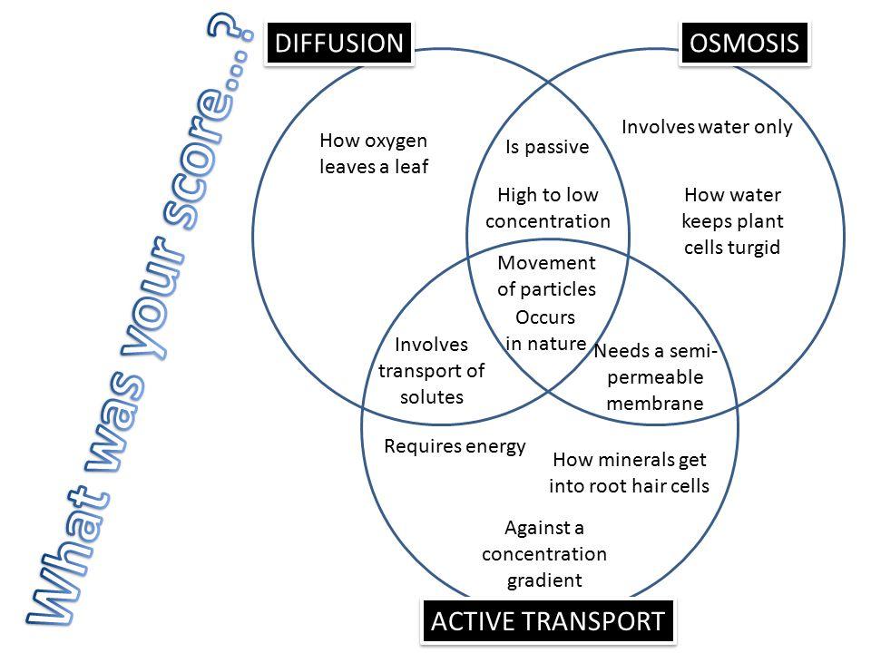 Active And Passive Transport Venn Diagram