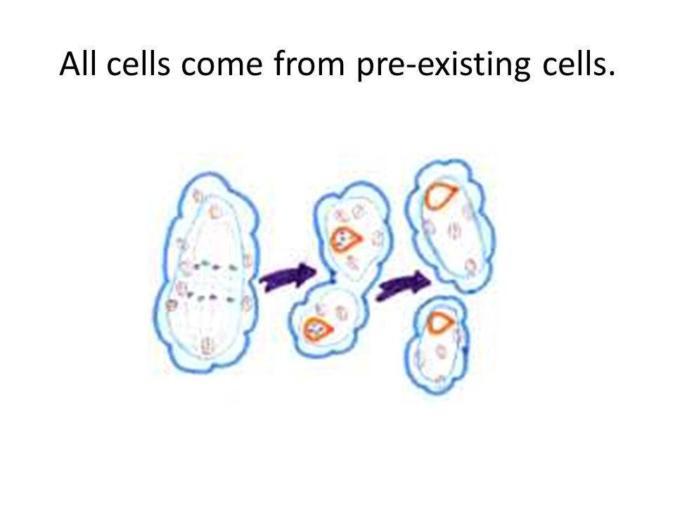 All Cells Come Where