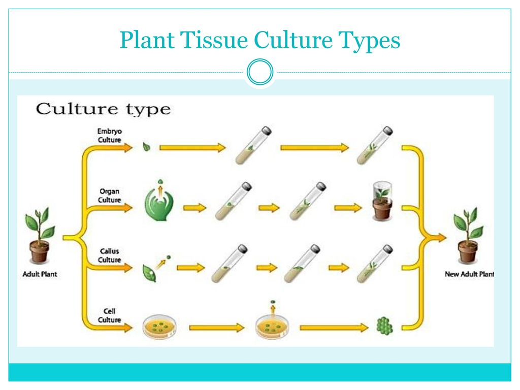 embryo protection in plants - HD 1024×768