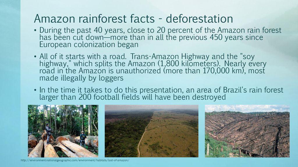 amazon rainforest facts - 1024×576