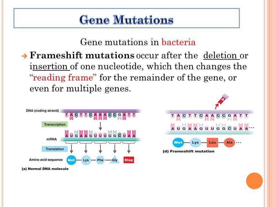Mutation Dna Sequence
