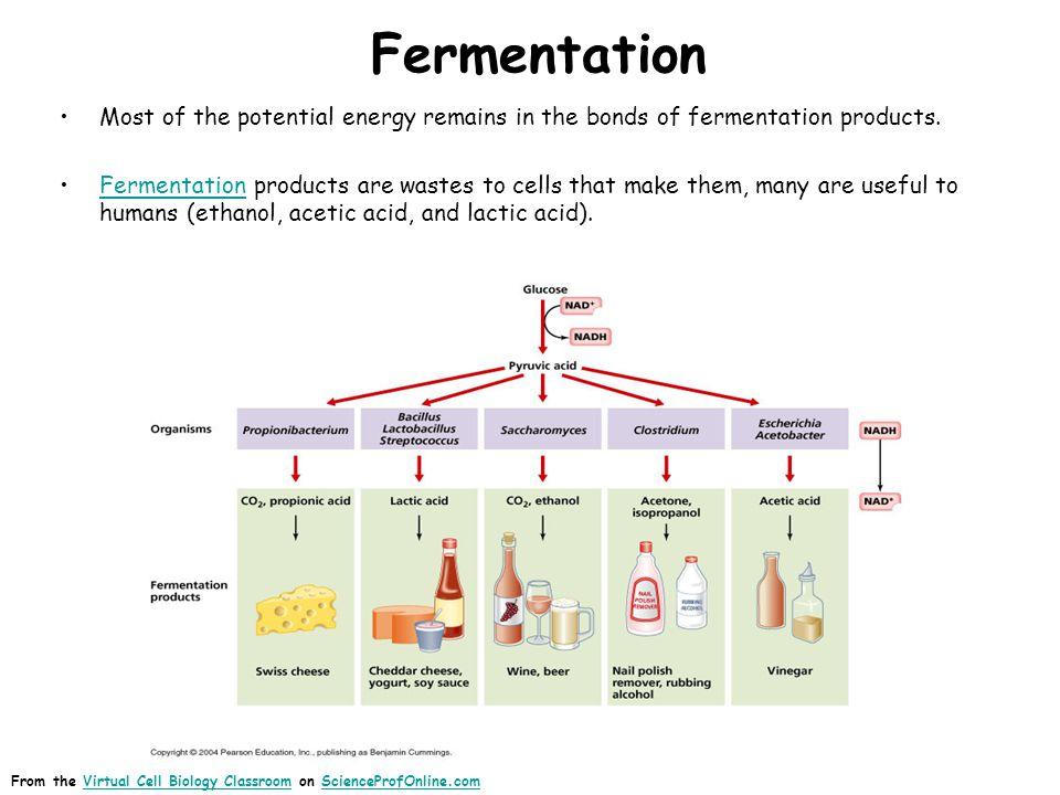 Ethanol Fermentation Biology