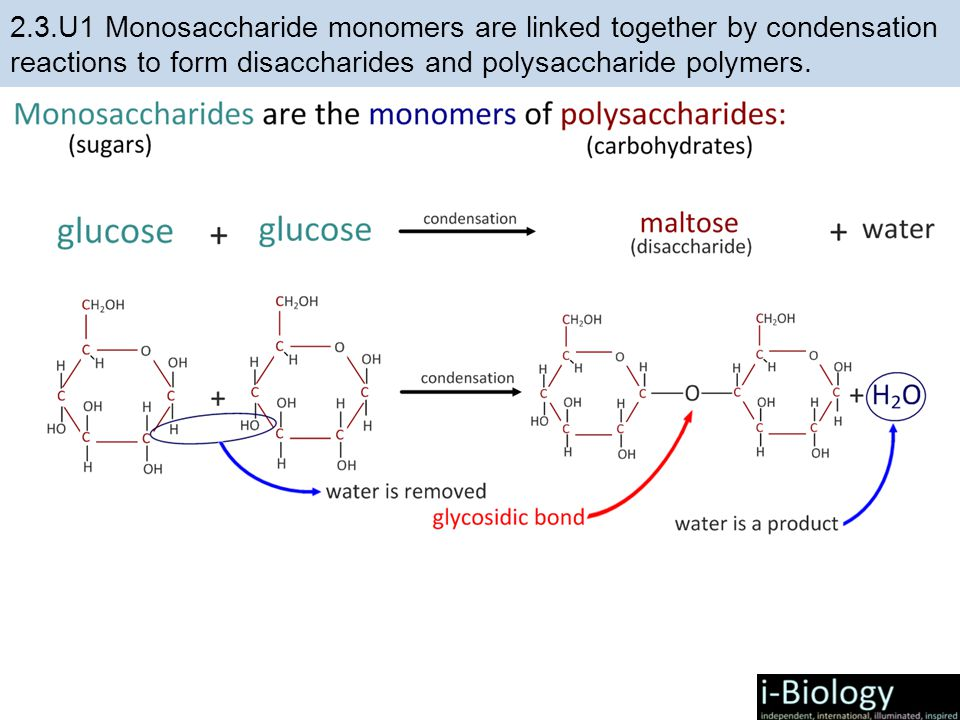 condensation of carbohydrates - 960×720
