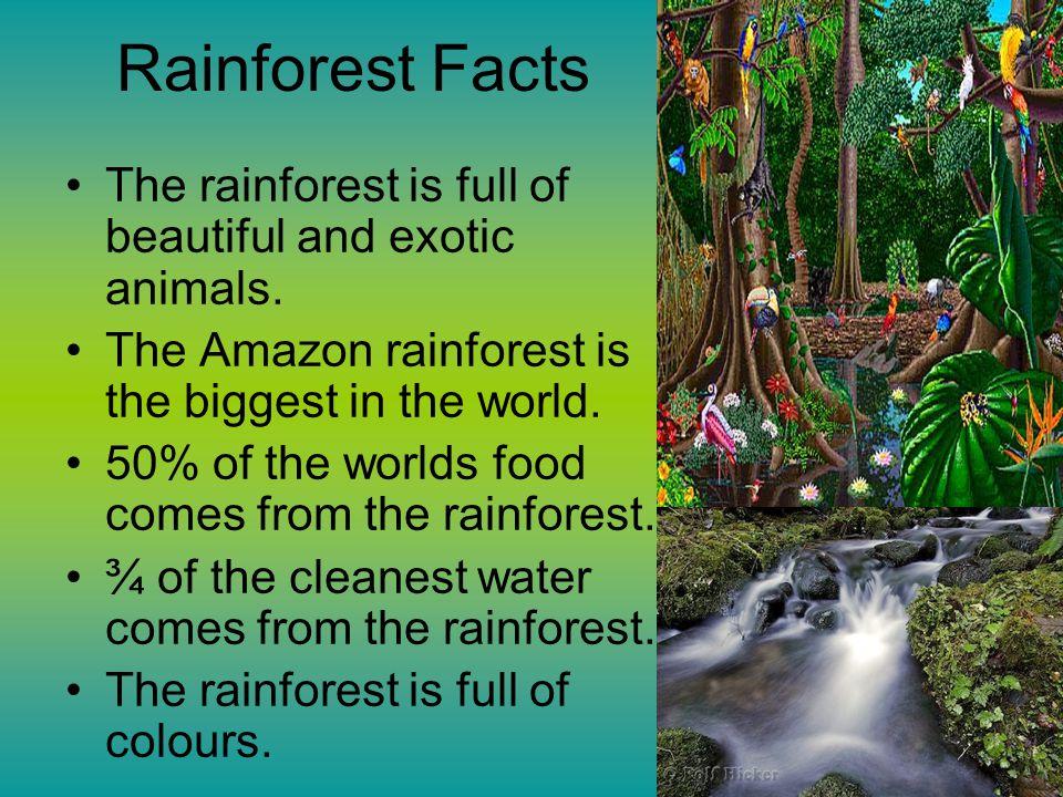 amazon rainforest facts - 960×720
