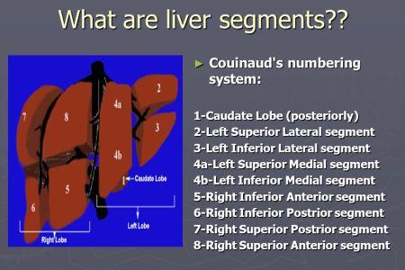 interior inferior medial left lower lobe » Full HD MAPS Locations ...