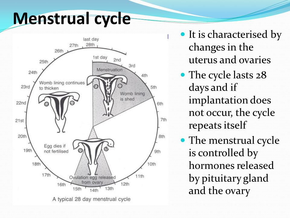 counting menstrual cycle - 960×720