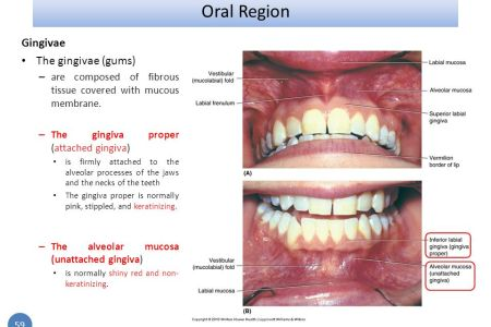 interior inferior buccal mucosa » Full HD MAPS Locations - Another ...