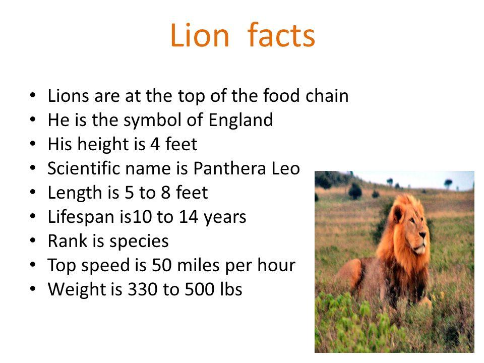Information Food Cheetah Chain