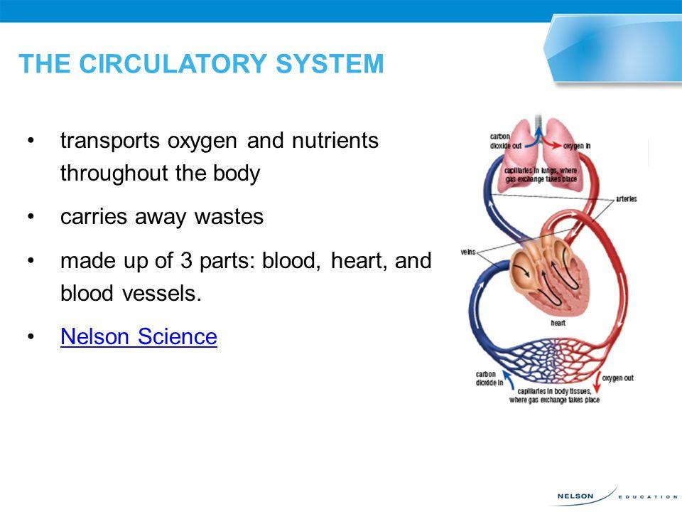 circulatory system parts - 960×720