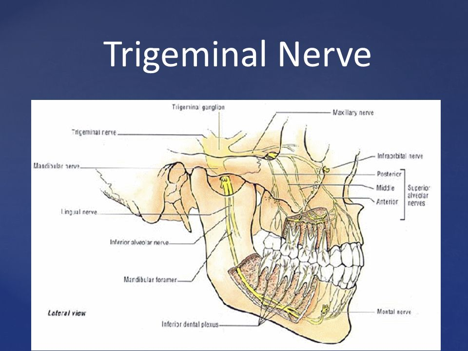 interior inferior nerve block » [HD Images] Wallpaper For Downloads ...