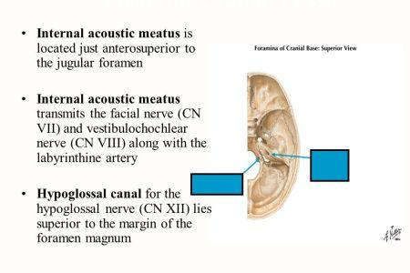 Foramen Magnum Hypoglossal Canal Jugular Foramen Anatomy