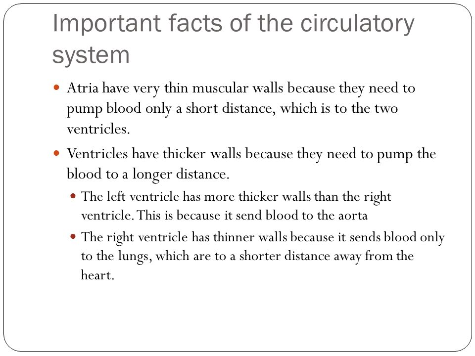 circulatory system facts