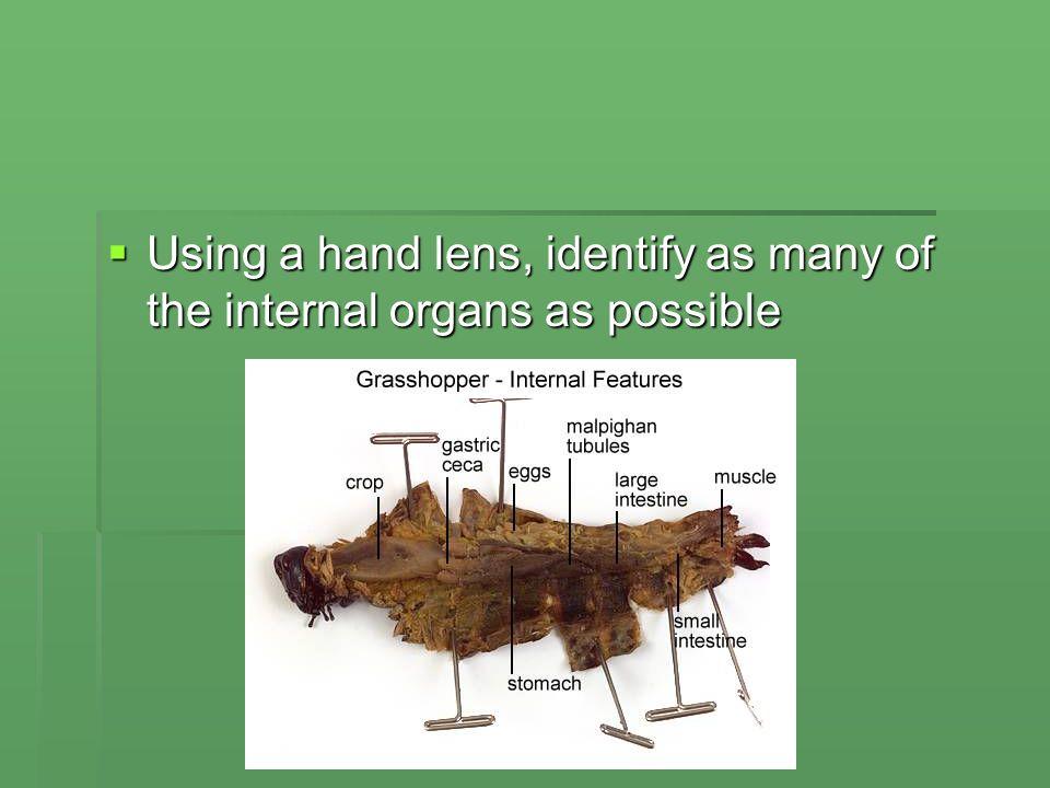 grasshopper internal dissection - 960×720