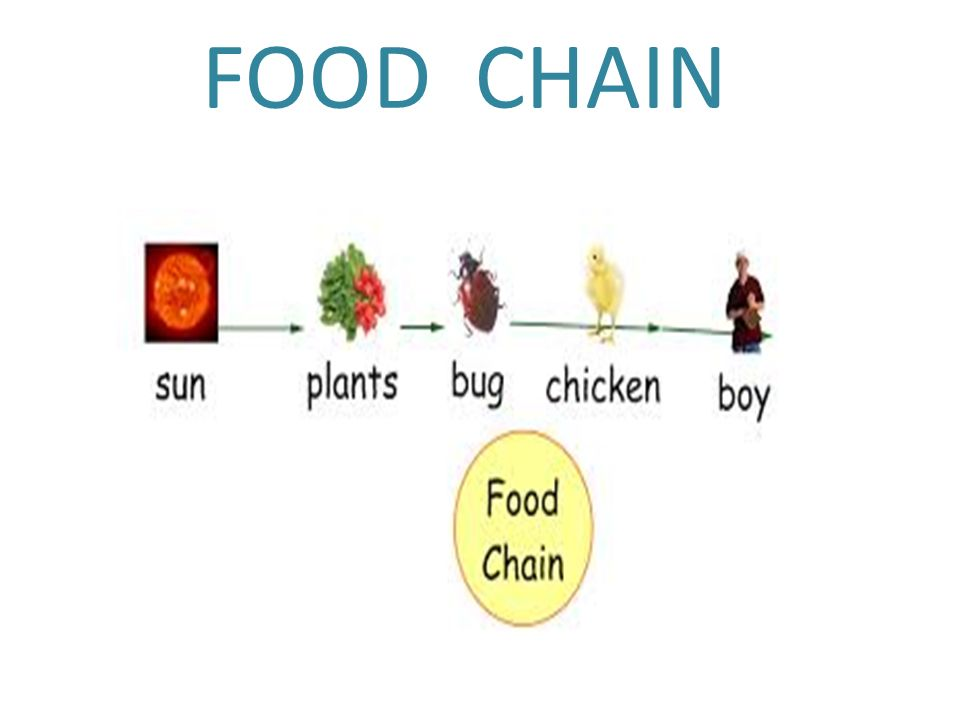 What 4 Chains Are Food