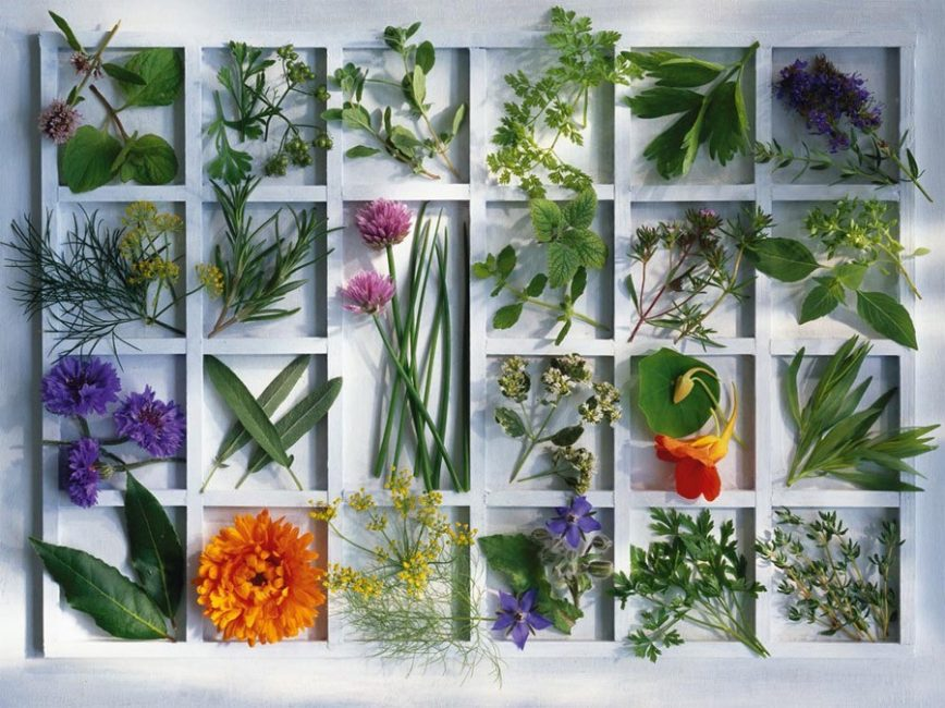 Лекарственные травы – одно из самых эффективных, проверенных средств в борьбе с затяжным кашлем