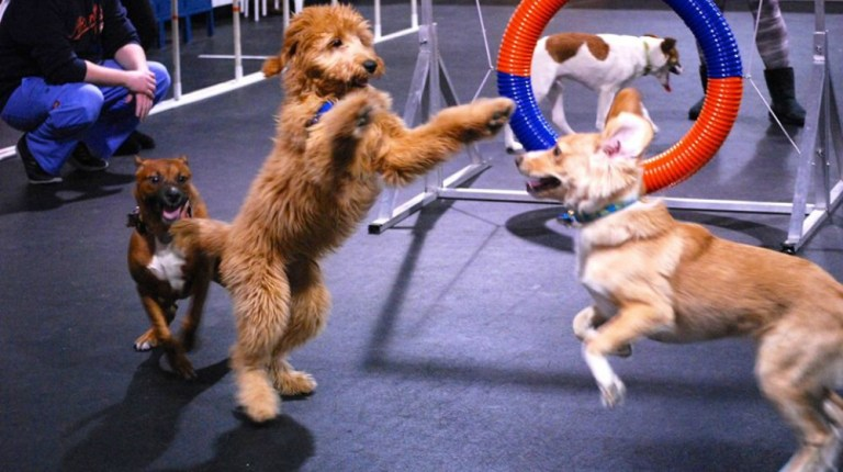 What Is The Best Approach To Dog Training?