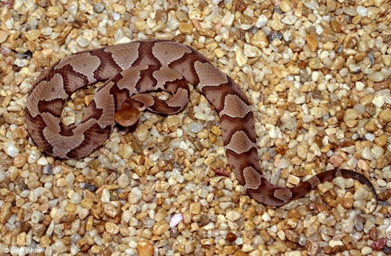 Is this Snake Venomous? What to Look for when Dealing with ...