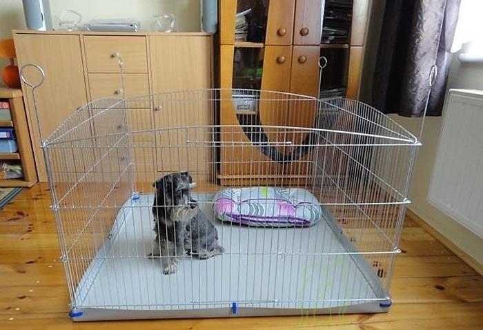 Küçük bir köpek için woller