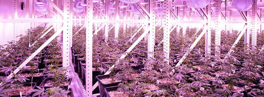 How to get the right temperature for growing cannabis plants