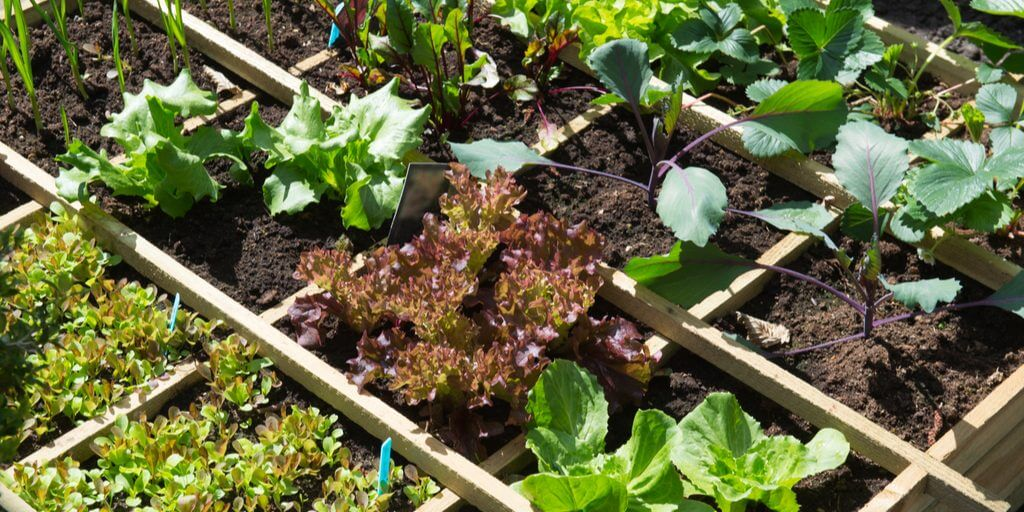 What is the best soil for a vegetable garden?